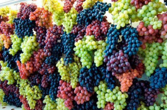 Grape-Wall1